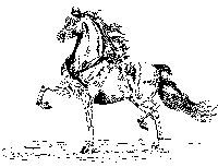 Key Classic Logo a sketch of a Morgan horse in motion