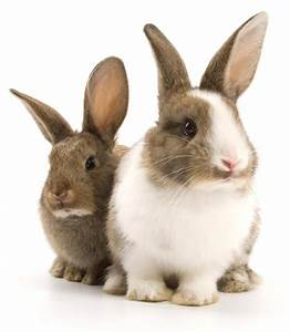 Stock picture of two rabbits side by side