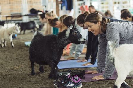 People and goats come nose to nose during goat yoga.
