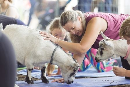 A goat gets petted by a woman doing yoga.