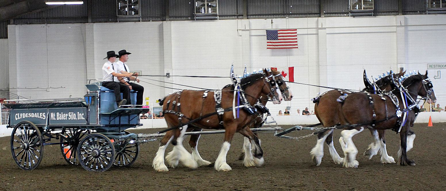 Clydesdale Show-08-28-2011